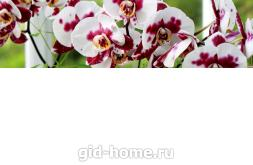 Фартук для кухни из МДФ  Дикая орхидея 2 610 х 2440 х 3,0 мм