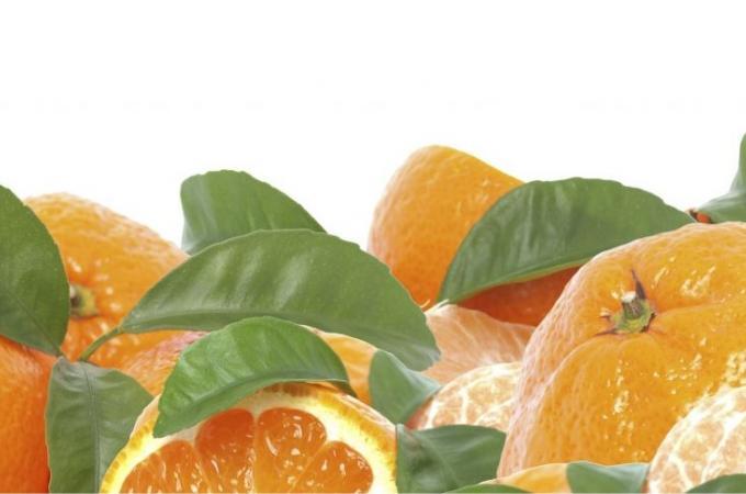 Фартук для кухни из МДФ Апельсины 610 х 2440 х 3,0 мм