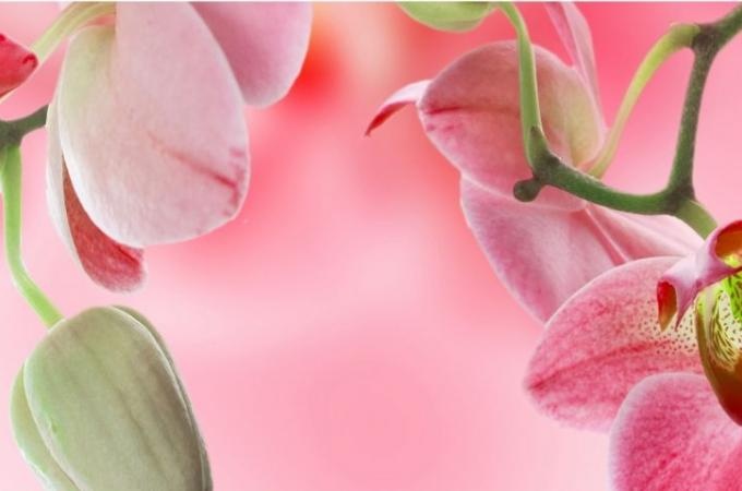 Фартук для кухни из МДФ Орхидея 3 610 х 2440 х 3,0 мм